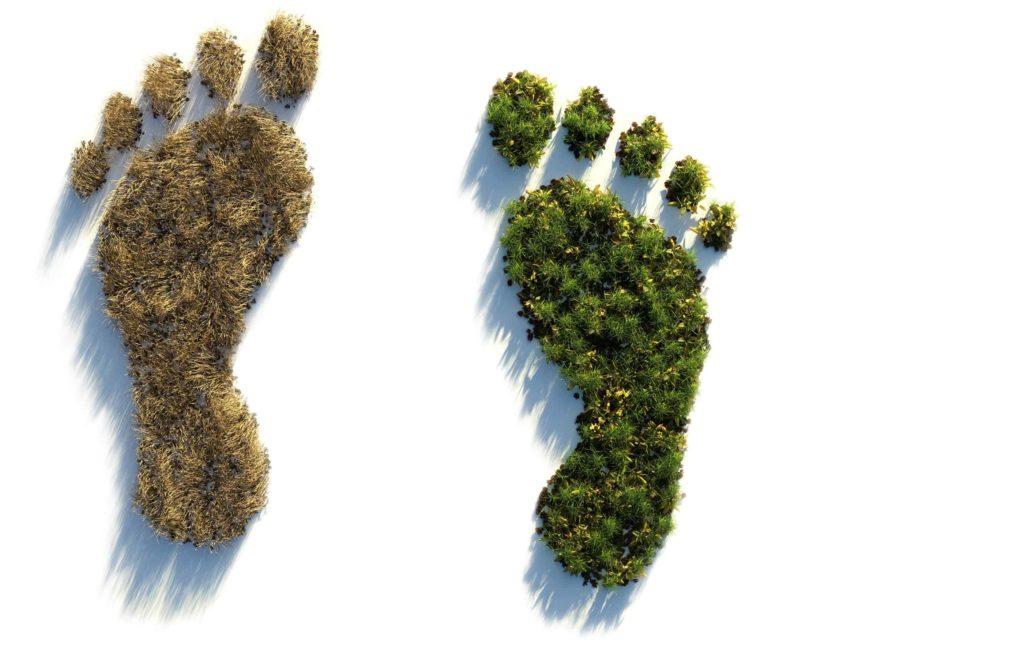 PHYSTINE – konsequent ökologisch