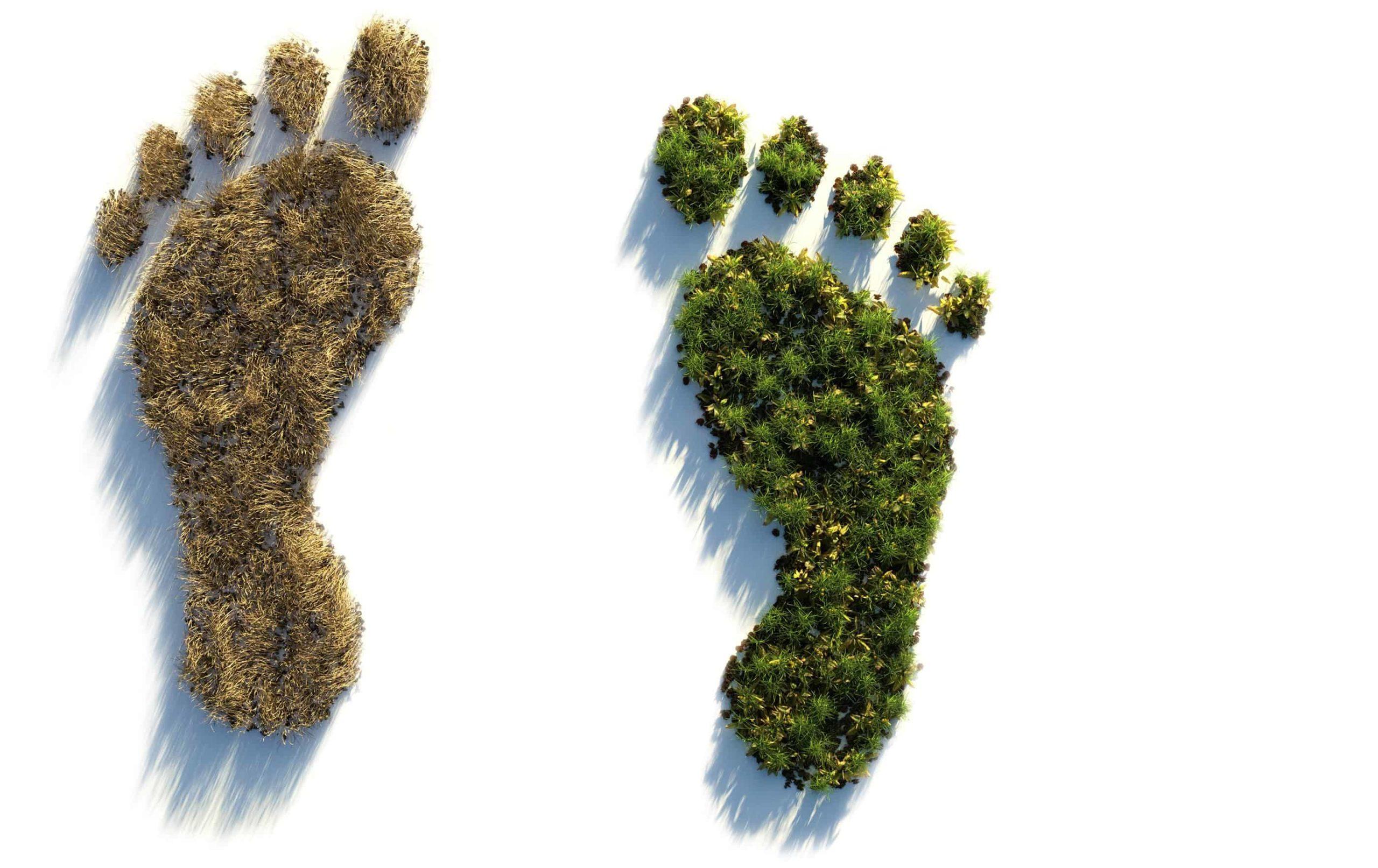 PHYSTINE konsequent ökologisch